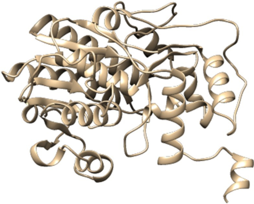 Three dimensional protein model of Gossypium hirsutum DFR protein, predicted by I-TASSER.