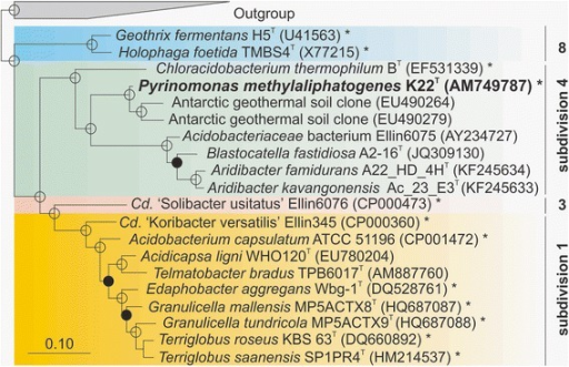 Phylogenetic tree based on 16S rRNA gene sequences of Pyrinomonas methylaliphatogenes K22T (highlighted) and other cultivated strains and clonal phylotypes within the phylum Acidobacteria. Four of the acidobacterial subdivisions are included. The tree was constructed via a Bayesian inference model (MrBayes), using Markov Chain Monte Carlo (MCMC - 2,000,000 resamples, four chains, temperature = 0.5) sampling methods to calculate posterior distributions of trees in the ARB software environment. Posterior probability values ≥ 90 % are indicated by open circles, ≥80 % by filled circles, and ≥70 % by open diamonds. The scale bar represents a 0.1 change per nucleotide position. Strains whose genomes have been sequenced, are marked with an asterisk; G. fermentans H5T (NZ_AUAU00000000), H. foetida TMBS4T (AGSB00000000), C. thermophilum BT (CP002414), P. methylaliphatogenes K22T (CBXV000000000), Candidatus 'S. usitatus' Ellin6076 (CP000473), Candidatus 'K. versatilis' Ellin345 (CP000360), Acidobacterium capsulatum ATCC 51196T (CP001472), Edaphobacter aggregans Wbg-1T (JQKI00000000), Granulicella mallensis MP5ACTX9T (CP003130), Granulicella tundricola MP5ACTX9T (CP002480), Terriglobus roseus KBS63T (CP003379), and Terriglobus saanensis SP1PR4T (CP002467). The phylotypes strains used as an outgroup included Thermoanaerobaculum aquaticum MP-01T (JX4200244), Dictyoglomus thermophilum H-6-12T (X69194), Caldisericum exile AZM16c01T (AB428365), Hydrogenobacter hydrogenophilus Z-829T (Z30424), Thermodesulfobacterium thermophilum DSM 1276T (AF334601), Deinococcus roseus TDMA-uv51 (AB264136), Truepera radiovicrix RQ-24T (DQ022076), Thermus aquaticus YT-1 (L09663), and Thermus scotoductus SE-1T (AF032127)