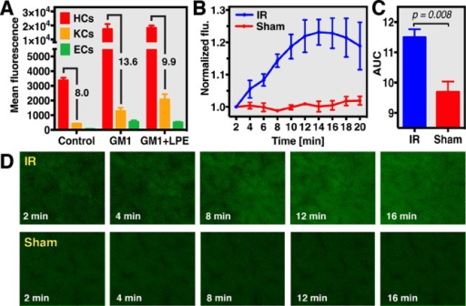 Real-timeanalysis of hepatocellular oxidative stress using liposome-deliveredCDCFH2 during hepatic ischemia-reperfusion (IR) and shamoperation in mouse livers. (A) Uptake of NBD-labeled GM1 and GM1 +lactosyl-PE (LPE) liposomes by hepatocytes (HCs), Kupffer cells (KCs),and endothelial cells (ECs), which was analyzed using flow cytometry.Oxidant formation during IR was analyzed by intravital fluorescence(flu) microscopy (D) and spectroscopy (B) in a standardized mousemodel of liver IR (60 min ischemia) using CDCFH2-encapsulatingGM1 liposomes. (C) Cumulative fluorescence formation during 20 minreperfusion, which was significantly higher in the IR group comparedto sham controls.