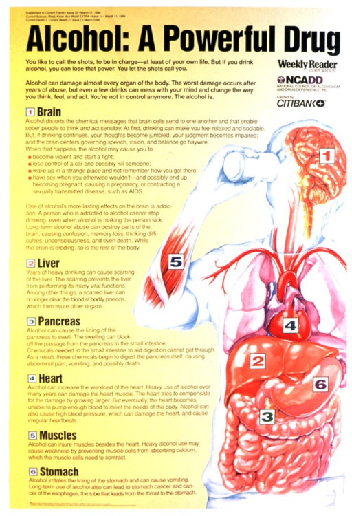 <p>Text and image on recto describe which organs can be damaged due to alcohol consumption.  The image is numerically keyed to the text.  Verso features a photo of young people, somewhat stupefied, connected by the plastic rings used to hold beer cans together.  Some of the people hold cans.</p>
