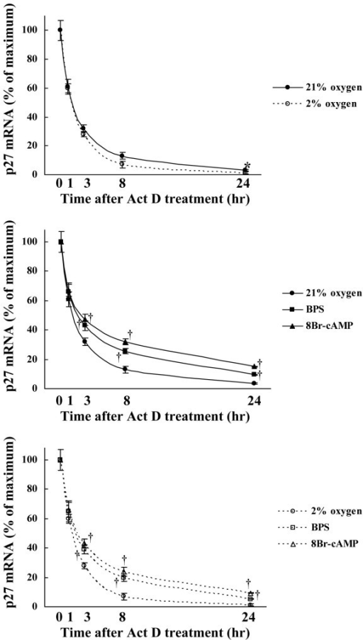 Effect of BPS and 8-Br-cAMP on p27kip1 mRNA stability during hypoxia. Cultured HPASMC were exposed to 21% or 2% oxygen concentrations with or without 10 μM of BPS or 1 mM 8-Br-cAMP for indicated periods. The p27kip1 mRNA stability was measured after adding 400 nM of Act D using Real-time RT-PCR using LightCycler™. Degradation of p27kip1 mRNA was significantly suppressed by BPS and 8-Br-cAMP under both normoxic and moderately hypoxic conditions, and mRNA stability was slightly decreased by moderate hypoxia. Graphs show % maximal p27kip1 mRNA expression. Line with solid circles, 21% oxygen; dotted line with open circles, 2% oxygen; line with solid squares, 21% oxygen and BPS; line with solid triangles, 21% oxygen and 8-Br-cAMP; dotted line with open squares, 2% oxygen and BPS; dotted line with open triangle, 2% oxygen and 8-Br-cAMP. Data are expressed as means ± SE (n = 6). *P < 0.05 versus 21% oxygen. †P < 0.05 versus oxygen controls.