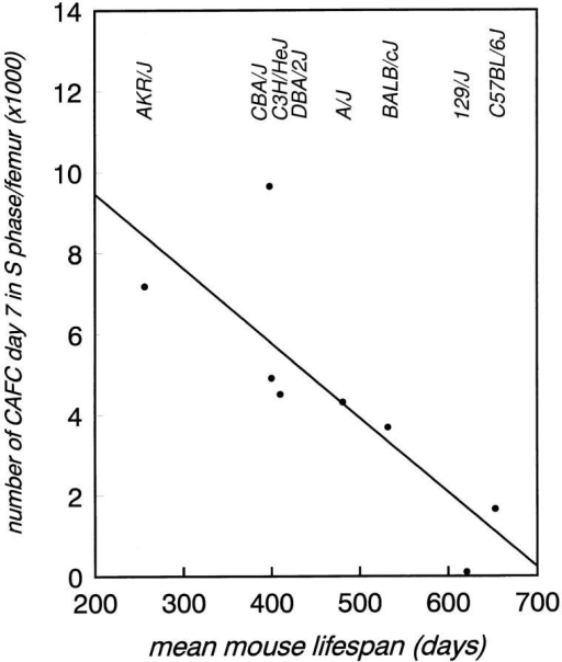 Individual mouse lifespan is negative correlated with the  number of cycling CAFC day 7 per femur. The fraction of cells in S-phase  was determined by using an in vitro HU suicide technique. The linear regression equation was: CAFC day 7 cycling = 13159 − 18.47 × lifespan,  r2 = 0.66, P <0.0145.