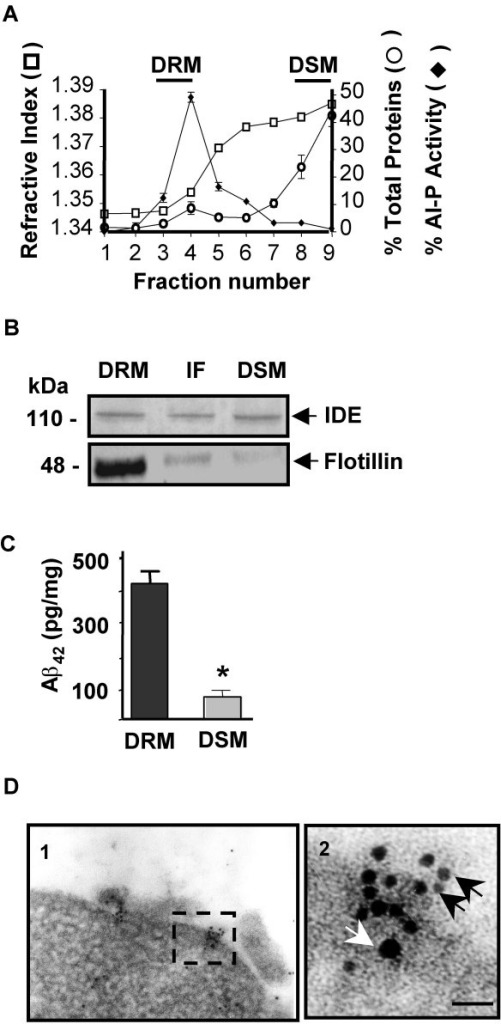 Endogenous IDE co-localizes with flotillin-1 and Aβ on the plasma membrane. A- Brain rat membranes were processed as described in Materials and Methods and fractions analyzed by refractive index (□), distribution of total protein (○) and GPI-anchored alkaline phosphatase activity (◆). DRMs, fraction 3–4; DSMs, fractions 8–9. Fraction 1, top of the gradient; fraction 9, bottom of the gradient.B- Representative western blotting of the same amount of total protein from DRMs and DSMs isolated from cortical tissue of a FAD brain showed co-localization of IDE and flotilin-1 in DRMs. IF, intermediate fraction. C- Significant increased amount of Aβ 42 was detected in DRM compared to DSM by ELISA. Bars represent means ± S.E.M of 2 independent experiments. *p < 0.001. D- Immunogold electron microscopy on cryosections of N2aSW cells showed clusters of gold particles at the plasma membrane (panel 1). A higher magnification of the section framed in panel 1 (panel 2) clearly indicated co-localization of gold particles of different size corresponding to Aβ (white arrow, 15 nm) and IDE (black arrows, 6 nm). Scale bar, 50 nm.