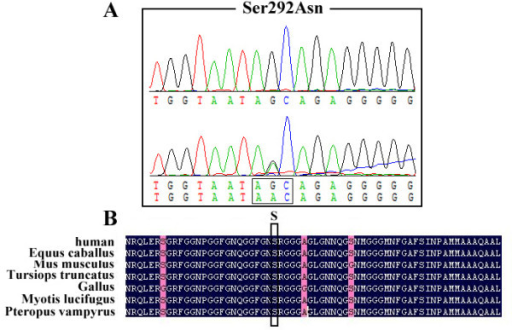 Chromatogram of Ser292Asn (A) and conservation of Ser292Asn in different species (B).