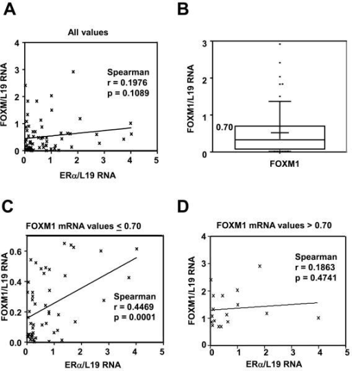 Significant correlation between ERα and FOXM1 expression in human breast samplesExpression of ERα mRNA and FOXM1 mRNA in non-cancerous breast biopsies and malignant breast epithelial tissues. RNA was isolated from epithelial cells purified from normal breast tissues and primary tumours and subjected to qRT-PCR with FOXM1, ERα and L19 primers. A) Graph shows the FOXM1 and ERα mRNA levels of the tumour samples after normalisation with L19 RNA levels. No significant correlation is seen using Pearson correlation when considering all values (n=69; Spearman r=0.198; p=0.109). Significance is defined as p<0.05. Line is linear regression, shown for illustrative purposes. B) Box and whisker plot showing the distribution of values for FOXM1. Box edges represent 25th and 75th percentiles; middle line is the median, while plus shows the mean. The whiskers represent the 10th and 90th percentiles, while outliers are shown as dots. The 75th percentile for FOXM1 mRNA values is 0.7002. C) The right-hand graph shows the FOXM1 and ERα mRNA levels of the tumour samples with FOXM1/L19 mRNA levels below the upper quartile. Correlation analysis was performed between FOXM1 and ERα mRNA. A significant and positive association was found between FOXM1 and ERα mRNA levels in breast patient samples with FOXM1 mRNA level below the upper quartile (n=52; Spearman r=0.447; p=0.0001). P < 0.05 was considered statistically significant. D) The lower left-hand graph shows the FOXM1 and ERα mRNA levels of the tumour samples with FOXM1/L19 mRNA levels in the upper quartile (0.7) of high levels of FOXM mRNA expression. No significant correlation is found using Pearson correlation (n=17; Spearman r=0.186; p=0.474). Significance is defined as p≤0.05.