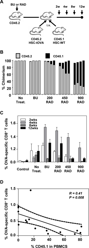Low level engraftment of transgenic HSCs is required for elicitation of high frequencies of antigen-specific CD8+ T cells.(A) Experimental design. Recipient B6 mice (CD45.2+) were not treated, treated with BU, or exposed to varying levels of radiation as described in Methods. 104 HSC-tOVA from OVA-transgenic mice on B6 background (CD45.2+) and 104 HSCs from SJL mice (CD45.1+) were co-administered into the B6 recipients. (B) Percentages of chimerism detected in the blood of recipient animals at indicated time points (4 mice per group). In some instances total values do not amount to 100% due to the presence of cells falling into the CD45.1−CD45.2− and CD45.1+CD45.2+ populations. (C) Percentages of OVA-specific CD8+ T cells in blood determined by OVA-specific MHC-I pentamer staining at indicated time points. (D) Inverse correlation between the level of engraftment and induction of antigen-specific CD8+ T cells (week 12 post HSC transplantation; analyzed by Spearman rank order correlation test).