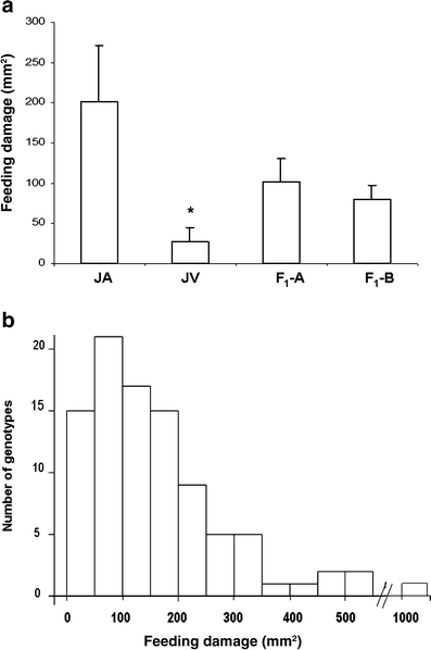 Variation in western flower thrips (WFT) feeding damage (mm2) on Jacobaea aquatica, Jacobaea vulgaris, 2 F1 and 94 F2 hybrids. a Mean feeding damage for one J. aquatica genotype (JA), one J. vulgaris genotype (JV), and 2 F1 (F1-A and F1 -B) genotypes. Error bars are standard errors, N = 12. J. vulgaris was significantly different from the other genotypes at * P < 0.05. b Distribution frequency for genotypic mean WFT feeding damage of 94 F2 hybrids. N = 3–6 for each genotype. In total, 587 plants were used in WFT bioassay