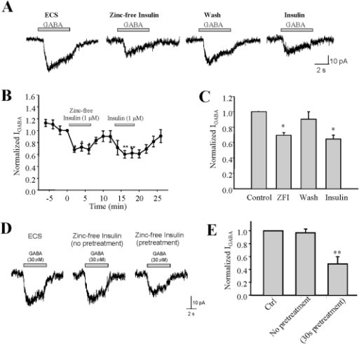 Zinc-free insulin inhibits GABA-evoked currents in INS-1 cells.(A) Representative traces of GABA-evoked currents in the absence and presence of zinc-free insulin and regular insulin in the same INS-1 cell. (B) The average of IGABA from separated experiments. (C) Normalized average IGABA was separately recorded during the course of experiment (control = average of first 4 IGABA, ZFI = average of IGABA in the presence zinc-free insulin, insulin = average of IGABA in the presence of insulin after washing out). (D) Representative traces of IGABA obtained from when GABA was applied simultaneously with insulin or 30 seconds after insulin pre-treatment. (E) Normalized average IGABA of separated experiments as described in (C). Data were mean ± SE. *p<0.05, n = 5.
