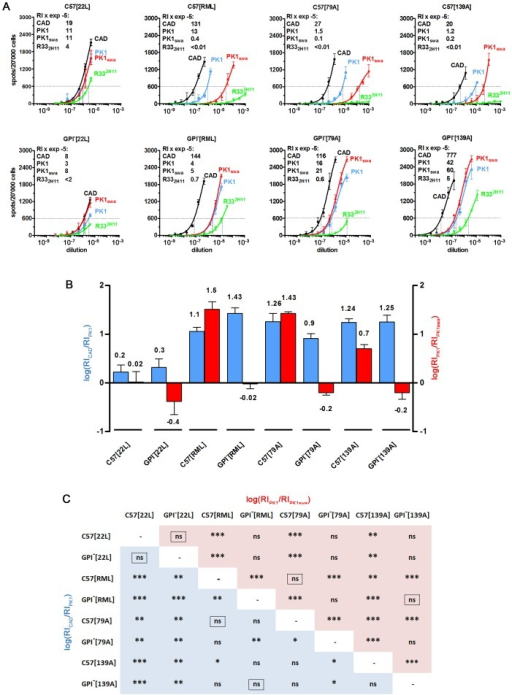 "The cell tropism of various prion strains changes after propagation in tgGPI− mice.Homogenates of GPI− or C57 brains infected with the strains indicated were subjected to the CPA. (A) The patterns elicited by 22L from both sources were very similar, however RML, 79A and 139A prions from wild-type brain were swa sensitive on PK1 cells and R332H11 incompetent, while those from tgGPI− brain were swa resistant and R332H1 competent. The RI600 (Response Index for 600 spots) on CAD, PK1, PK1+swa and R332H11 cells is given within the graphs (left upper corner) and the logarithm ± SD of the ratios RICAD/RIPK1 (blue) and RIPK1/RIPK1+swa (red) is plotted in the bar graph (B). The matrix (C) gives the p values for the pairwise comparison of two strains on the basis of their log[RICAD/RIPK1] (blue) and log[RIPK1/RIPK1+swa] (red) values. The framed ""ns"" indicates p values>0.1 for both log[ratios]. For example, C57[RML] and GPI−[RML] prions are significantly different (p = 0.0097 for log[RICAD/RIPK1] and p = 0.0001 for log[RIPK1/RIPK1+swa]), as are C57[79A] and GPI−[79A] prions, whereas C57[22L] and GPI−[22L] prions do not show a significant difference (framed ""ns""; p>0.1) for both logRI ratios. By the same token C57[79A] and C57[RML], and GPI−[139A] and GPI−[RML] prions are not distinguishable, while C57[139A] and C57[RML] prions differ."