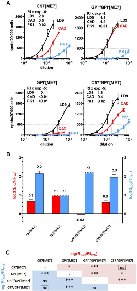 ME7 prions propagated in tgGPI− mice for one or two passages acquire novel characteristics.(A) Serially diluted brain homogenates were analyzed on LD9, CAD and PK1 cells by the CPA. After the first passage of ME7 prions in GPI− mice (GPI−[ME7]), the RI on CAD cells dropped 20-fold, most likely reflecting low titers, but increased about 30-fold after the second passage (GPI−/GPI−[ME7]), indicating adaptation to the GPI− environment. Returning prions from the first passage in GPI− brain to wild-type brain (C57/GPI−[ME7]) restored the original CPA pattern. (B) Log[RILD9/RICAD] (red) and log[RILD9/RIPK1] (blue) are plotted as a bar graph. (C) The matrix shows that C57[ME7] and C57/GPI−[ME7] prions do not differ, while both differ in at least one log[ratio] from GPI−[ME7] and GPI−/GPI−[ME7] prions.