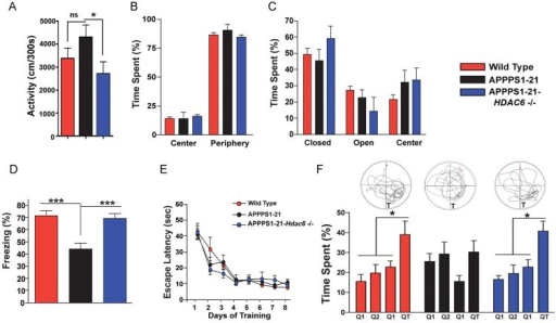 Loss of Hdac6 rescues memory function in APPPS1-21 miceTotal activity in the open field in wild type, APPPS1-21 and APPPS1-21-Hdac6−/− mice (n = 8, Student's t-test, p = 0.0289).Time spent in the centre versus the periphery of the open field.Time spent in the centre and periphery of the elevated plus-maze in wild type, APPPS1-21 and APPPS1-21-Hdac6−/− mice.Freezing behaviour analysed 24 h after fear conditioning training in wild type (n = 9), APPPS1-21 (n = 11) and APPPS1-21-Hdac6−/− mice (n = 10), analysed by Student's t-test, p = 0.0005.Escape latency during the Morris water maze training in wild type, APPPS1-21 and APPPS1-21-Hdac6−/− mice.Target preference analysed in the probe test by comparing times spent by wild type, APPPS1-21 and APPPS1-21-Hdac6−/− mice in different quadrants on the water maze, analysed by Student's t-test, *p = 0.0036. The upper panel indicates representative swim paths during the probe test. Values are mean ± SEM.