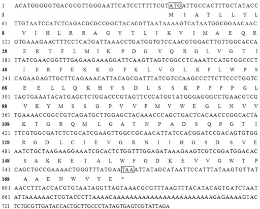 SLAWD nucleotide and amino acid sequences.Boxes indicate the initiator codon and terminator codon.