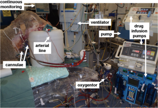 Validated ovine ECMO model. Reproduced with permission, Fung et al, ISBT Science Series 2012.