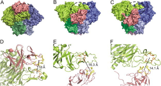 Molecular docking of oxygenase–ferredoxin complexes. The surface plots (side view) of the docked complexes of respective ferredoxin and terminal oxygenase components of (A) naphthalene 1,2-dioxygenase from Pseudomonas putida NCIB 9816-4, (B) biphenyl 2,3-dioxygenase from Sphingobium yanoikuyae B1 and (C) terminal oxygenase AhdA1fA2f from Sphingobium sp. PNB. In each structure, the visible α-subunits are colored in light green and blue, while the visible β-subunits are shown in dark green and slate. The ferredoxins in each complex are colored pink. Black dotted circle in each complex shows the region where the Rieske clusters of ferredoxin and oxygenase large subunit lie in close proximity for electron transport, while the same as enlarged (D, E and F) are shown in the corresponding cartoon representations. Distance between each pair of redox centre is shown in black dotted lines. (For interpretation of the references to colour in this figure legend, the reader is referred to the web version of this article.)