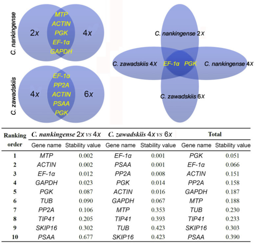 Venn diagram to identify stably transcribed reference genes in Chrysanthemum spp., and their stability values calculated using NormFinder.