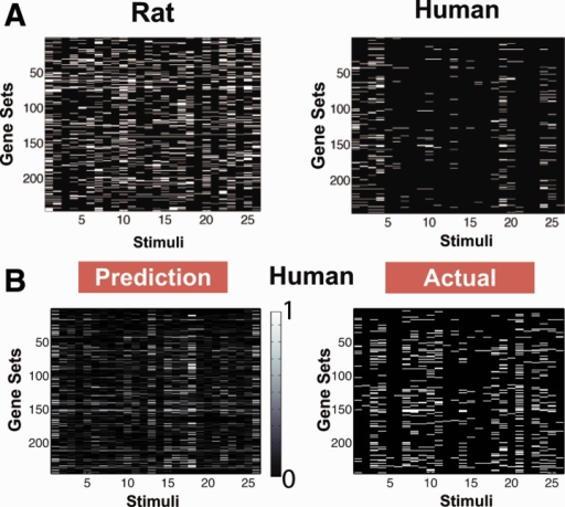 (A) Gene set enrichment under the 26 training stimuli for rat and human. The FDR scores of the gene sets are displayed above; white implies differential expression (FDR < 0.25). The number of gene sets that turn on in rat and human are dramatically different. (B) The prediction compared with the actual measurements of differential expression in human gene sets under the 26 test stimuli. The color bar indicates level of confidence in the prediction: 0 off, 0.5 uncertain, 1 on
