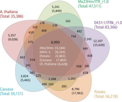 Venn diagram showing the numbers of gene clusters in Ipomoea trifida and other plant species, i.e. Arabidopsis thaliana, potato (Solanum tuberosum), and cassava (Manihot esculenta). The black and white numbers in parenthesis represent the numbers of non-clustered sequences and sequences clustered with other species, respectively. The green, purple, orange, aqua, and red numbers in parenthesis represent the total numbers of putative genes subjected to clustering.