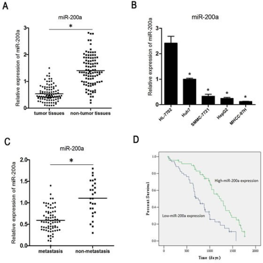 MiR-200a is down-regulated in HCC(A) The expression of miR-200a in HCC tissue specimens and in corresponding non-tumor tissues was measured by qRT-PCR. (B) The expression status of miR-200a in 4 human HCC cell lines and one normal human hepatocyte was measured by qRT-PCR. (C) The relative expression level of miR-200a in primary tumor samples with or without clinically confirmed metastasis was measured by qRT-PCR. (D) Kaplan-Meier analysis of the correlation between miR-200a expression and the overall survival of 101 patients with HCC. Patients in the low miR-200a expression group had a significantly shorter overall survival (P < 0.01); * P < 0.05, t test.