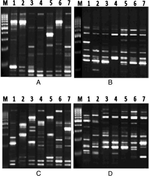 RAPD-PCR fingerprinting of sperm generated by primers OPA01 (A), OPA08 (B), OPA12 (C) and OPA20 (D). The appearance and disappearance of bands of the same pattern as the negative control were considered. Rat samples treated with lead nitrate after 21 days (Lane 7), 30 days (Lane 5) and 60 days (Lane 3). Rat samples treated with both lead nitrate and MSCs/BM after 21 days (Lane 6), 30 days (Lane 4) and 60 days (Lane 2). Normal control group (Lane 1). M = marker 1,000 bp. MSCs/BM, bone marrow-derived mesenchymal stem cells; RAPD, random amplified polymorphic DNA.
