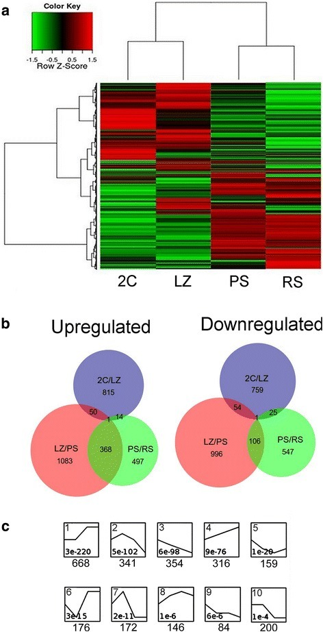 Representation of DEG between pairwise sample comparisons of the four populations in chronological order. The following comparisons were performed: 2C/LZ; LZ/PS; PS/RS (/FC/ ≥ 2; Kal's test p ≤ 0.01). a. Heat map of expression levels and hierarchical clustering for the global gene expression in the four samples. All genes detected as differential in at least one sample were included. Z-score values are coded on the green-to-red scale (high expression: red; low expression: green). b. Venn diagram of up-regulated and down-regulated genes. Separate and overlapping expression between samples is shown. c. Temporal expression profiles of DEG, ordered based on the p-value significance of the number of assigned vs expected genes. Only the 10 most significant profiles are shown. The p-value (bottom of each panel) and number of genes (below) for each profile are shown
