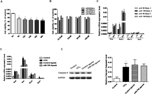 miR-706 has a minor effect on oxidative stress-induced apoptosis in hepatocytes.H2O2 (300 uM) induced decreased cell viability measured with CCK8 in hepatic L02 cells, *P < 0.05. n = 4. (B) Introduction of miR-706 has little effect on cell viability in hepatic L02 cells. L02 cells were transfected with negative control (NC) or miR-706 (at a concentration of 12.5 nM, 25 nM, 50 nM and 100 nM, respectively) duplex for 8 h, and then stimulated with 300 μM H2O2 or remained untreated for 6 h before measurement with CCK8, n = 4. (C) Hepatic L02 cells were transfected with negative control (NC) or miR-706 duplex for 8 h, and then stimulated with 300 μM H2O2 or remained untreated for 1 h and 24 h, and pro-apoptotic genes Bax, Bak1, Bbc3, and Bad were measured by real-time PCR. GAPDH was used as an internal control. * P < 0.05. (D) mRNA expression of Bax, Bak1, Bbc3, and Bad were detected by real-time PCR and (E) cleaved caspase-3 expression was detected by Western blot in 6-week CCl4-treated livers injected with miR-706 agomir. GAPDH was used as an internal control. *P < 0.05.
