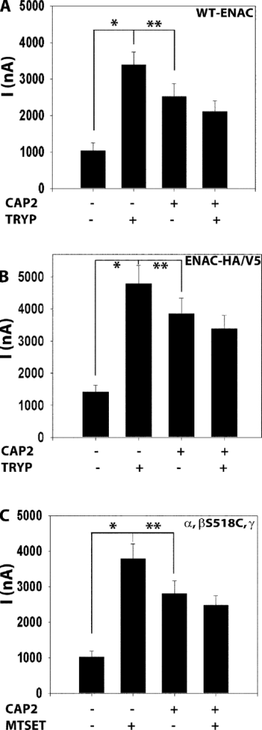 CAP2 and trypsin effects on amiloride-sensitive INa of WT or HA-NT– and V5-CT–tagged or β-S518C mutant channels in oocytes. WT α-, β-, γ-, or double tagged (HA-NT/V5-CT) and mutant α-, β-S518C, and γ-cRNA (0.3 ng each) ENaC subunits and 1 ng CAP2 cRNA were injected into oocytes. 24 h after injection, two-electrode voltage clamp assays were conducted. Currents measured in the presence and absence of 10 μM amiloride, while clamping the membrane voltage to −100 mV, were digitized and recorded. (A) Stimulation of ENaC WT channels by coexpression of CAP2 and 2 μg/ml of exogenous trypsin (n = 24). (B) CAP2 and trypsin (2 μg/ml) stimulation of ENaC α-, β-, and γ-HA-NT/V5-CT–tagged subunits (n = 18). (C) 1 mM MTSET activation of α-, β-S518C, and γ mutant untagged channels with or without CAP2 (n = 24). (A–C) Batches of oocytes were extracted from four to five different frogs. Results are expressed as the means ± SE. * and **, P < 0.0001, significant difference when CAP2- or trypsin-stimulated INa is compared with control basal INa. Statistical significance was determined using an unpaired Student's t test.