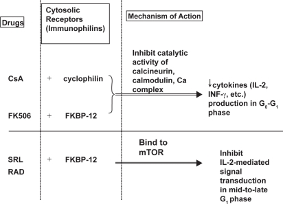 Mechanism of action of cyclosporine, tacrolimus, and si