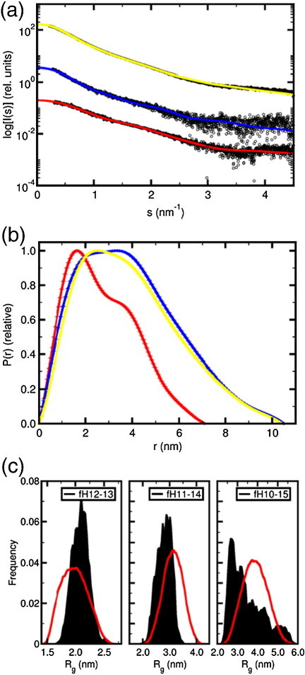 Overview of SAXS data and analysis. (a) Scattering curves for fH12–13 (red), fH11–14 (blue), and fH10–15 (yellow). Continuous lines represent fits obtained by CRYSOL for the best fH12–13 NMR model, or by rigid-body modelling (BUNCH) for fH11–14 and fH10–15; curves have been arbitrarily displaced along the logarithmic axis for clarity. (b) p(r) functions (arbitrary units) for fH12–13 (red), fH11–14 (blue), and fH10–15 (yellow), computed from X-ray scattering patterns using GNOM. (c) Radius-of-gyration distributions of pools (red lines) and selected structures (black) for fH12–13, fH11–14, and fH10–15 using EOM. Integral of area defined by histograms = 1.