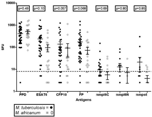 Differences in ELISPOT responses between TB casesinfected with M. tuberculosis versus M. africanum. The TbD1 based antigens mmpl6C, mmpl6N, and mmps6 did not induce robust responses in M. africanum infected patients, despite the presence of an intact TbD1 region in M. africanum. The horizontal lines indicate the mean and SEM. FP = ESAT-6/CFP-10 fusion protein.