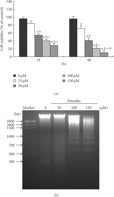 Emodin affected the percentage of viable cells and DNA fragmentation in WEHI-3 cells. Cells (1 × 104 cells/well; 96-well plates) were plated in RPMI 1640 medium + 10% fetal bovine serum (FBS) with 0, 25, 50, 100, and 150 μM of emodin for 24 and 48 h. The cells were collected by centrifugation and the viable cells were determined by using the MTT assay (a). Cells were treated with 0, 50, and 100 μM of emodin for 24 h, and then DNA was isolated for DNA gel electrophoresis (b) as described in Section 2. Columns, mean of three determinations; bars, SD. a, P < .05 shows significantly different when compared with DMSO-treated control; b, c, and d, P < .05 indicates significantly different compared with 25, 50, and 100 μM emodin-treated groups, respectively (one-way ANOVA followed by Bonferroni's test for multiple comparisons).