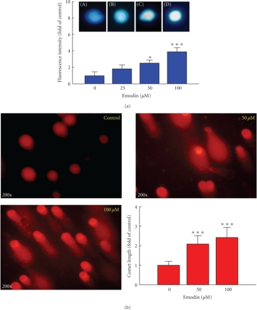 Effects of emodin on apoptosis and DNA damage in WEHI-3 cells by using DAPI staining and Comet assay. Cells (2 × 105 cells/well) in 12-well plate were incubated with 0, 25, 50, and 100 μM emodin for 24 h and apoptosis was determined using DAPI staining (a). Data represent mean ± SD of at least three experiments. Cells were treated with 0, 50, and 100 μM emodin for 24 h and then were harvested for the examination of DNA damage using the Comet assay (b) as described in Section 2. Comet tail length was calculated, quantified and expressed in mean ± S.D for at least three replicates. *Significantly different compared with DMSO-treated control, P < .05, and ***significantly different from the control sample at P < .001.