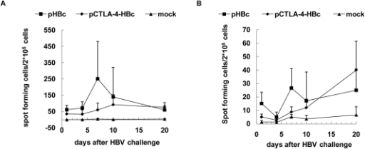 Specific T-cell responses to HBcAg and HBsAg epitopes in mice after HI.The specific T-cell responses to the CTL epitope HBcAg aa 87-95 and HBsAg aa 29-38 in mice immunized with pHBc, pCTLA-4-HBc, and PBS after HI of pAAV/HBV1.2. HBcAg (A) and HBsAg (B)-specific T-cell responses were detected by ELISpot after HI challenge at days 1, 4, 7, 10 and 20, and are presented as spot-forming cells per 2×105 cells.