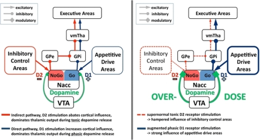 "The Yin-and-Yang model of appetitive drive and inhibitory control. Left The effects of tonic and phasic dopamine release on cortical connections with the direct and indirect pathways of the basal ganglia (here nucleus accumbens (Nacc) and ventral tegmental area (VTA), modified model after Goto and Grace 2005). Right In a majority of the patients with PD, dopaminergic depletion decreases tonic D2-receptor stimulation in the ventral striatum/Nacc. In susceptible patients on the other hand, a constitutionally increased tonic dopamine level leads to relatively normal levels of tonic D2-receptor stimulation in the ventral striatum/Nacc. Therapeutic use of DAA further increases D2-receptor stimulation to the point of an ""overdose"" situation, leading to a hampered engagement of inhibitory cortical areas and increased influence of appetitive drive areas"