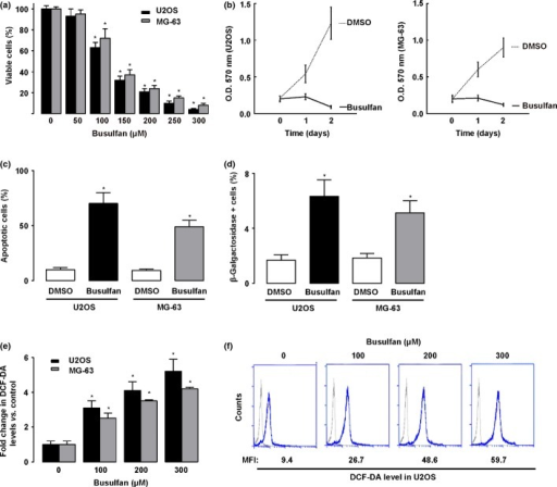 Measurements of cell viability, proliferation, apoptosis, senescence, and reactive oxygen species (ROS) levels in busulfan-treated osteosarcoma cells. (a) Percentage of viable cells (U2OS and MG-63) 24 h after different doses of busulfan. (b) Busulfan (100 μM) significantly inhibited the proliferation of U2OS and MG-63 cells. (c) Busulfan increased the apoptosis of U2OS and MG-63 cells. (d) Quantification of β-Gal positive cells in busulfan-treated U2OS and MG-63 cells. (e,f) 2'-7'-Dichlorodihydrofluorescein diacetate (DCF-DA) levels in U2OS after the different doses of busulfan treatment by representative cytometry histogram (e) and by quantification (f). MFI, mean fluorescence intensity. *P < 0.05.