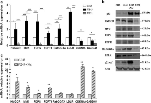 hmgr  mvk  fdps  fdft1  rabggta and ldlr expression in