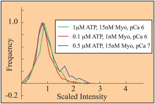 Histograms, collected under three different experimental conditions [52], collapse upon rescaling fluorescence.Scaled intensity, defined in the text, gives a single fluorescently-tagged myosin (GFP-S1) an intensity of 1. The observation that each histogram has a peak near 1 suggests that 1) under these three conditions, mostly single GFP-S1s bind; and 2) the emission of an excited GFP is constant and measured fluorescence is inversely proportional to frame rate. This latter is a central assumption of our analysis.