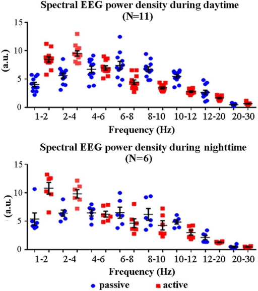 Individual EEG spectral power density values at frequency bands of interest (1–2 Hz, 2–4 Hz, 4–6 Hz, 6–8 Hz, 8–10 Hz, 10–12 Hz, 12–20 Hz, and 20–30 Hz) for any lemur (one circle = one lemur) and the active and passive states.These values refer to the daytime (N = 11) and nighttime (N = 6) periods of interest. Lemurs having an insufficient amount of artefact-free EEG epochs in the passive state for the final analysis were not considered (daytime: L#4 and L#10; nighttime: L#1, L#2, L#3, L#4, L#11, L#12, and L#13). The mean (± standard error, SE) EEG power density values are also plotted.