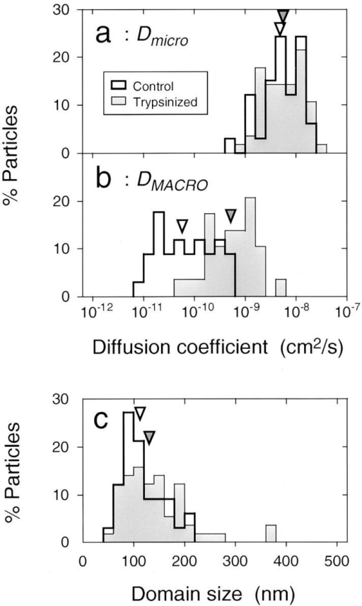 Distributions of the microscopic diffusion coefficient  Dmicro (a), the macroscopic diffusion coefficient DMACRO (b), and  the size of the confinement domain L (c). The median values are  indicated by arrowheads. Open bars, intact band 3; hatched bars,  trypsin-cleaved band 3.