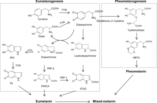 free Plant biotechnology and molecular markers