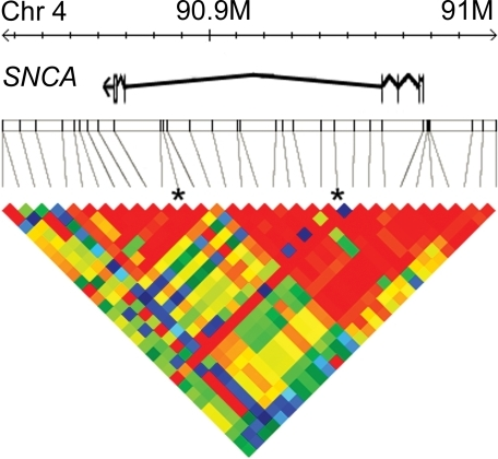 The genetic architecture of the SNCA gene and the markers genotyped.The base pair position along chromosome 4 is shown by the top ruler. The position of the α-synuclein gene is shown in the next row down, with exons represented by vertical lines and introns by lines connecting them. The relative positions of the genotyped markers are shown below, with vertical lines connecting position to the linkage disequilibrium map. Asterisks show the two markers demonstrating association in MSA-C. Only the left-most marker showed association with MSA as a whole. (For a list of markers genotyped and P-values, see Table 3). The coloured triangle is the linkage disequilibrium heat map showing the strength of association between pairs of markers as measured by D′. Red is high and blue low with the other colours intermediate. The two associated SNPs are in different linkage disequilibrium blocks and are not in linkage disequilibrium with each other.