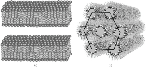 Different phases of lipid: (a) lamellar (L) phase and (b)  inverted hexagonal (HII) phase.