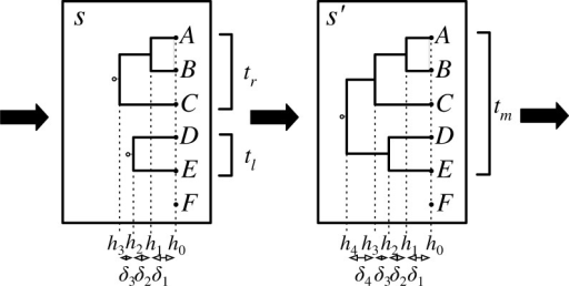 A partial state s is extended to a new partial partial state  by merging trees  and  to form a tree  with height . In the PriorPrior proposal,  and  are chosen uniformly from the three possible pairs, whereas the height increment  is chosen from an exponential distribution. In the PriorPost proposal,  is chosen from the exponential prior and, given , the pair to merge is chosen from a multinomial with parameters proportional to the likelihood of the tree .