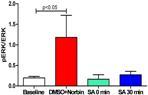Salvinorin A administration blocked the elevated CSF ERK activity observed 1 h after HI.The ration of pERK/ERK at 1 hour after HI in the control groups (n = 10, DMSO and nor-BIN groups) increased significantly compared with the baseline. The baseline for all the groups are pulled together (n = 20) and the data from DMSO and nor-BIN groups were pulled together and presented as DMSO+Norbin (n = 10) to increase the power of the statistical analysis because of some large variances were observed. The elevated ERK activities were abolished in the groups with salvinorin A administrated immediately (n = 5) or 30 min (n = 5) after HI. Norbin: norbinaltorphimine; SA: Salvinorin A.