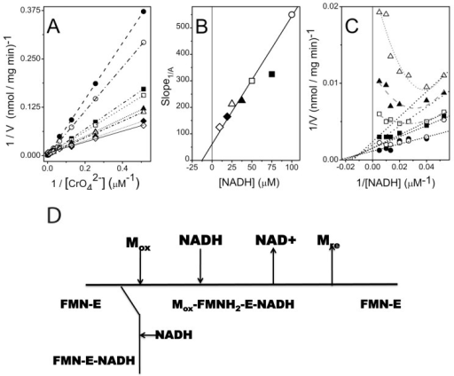 Substrate inhibition by NADH in an ordered bireactant mechanism.A. Double-reciprocal plots of initial velocities versus substrate concentrations assayed with fixed concentration of NADH: 9.5 µM (open diamond), 19 µM (closed diamond), 25 µM (open triangle), 37.5 µM (closed triangle), 50 µM (open square), 75 µM (closed square), 100 µM (open circle), and 200 µM (closed circle). The VMax is calculated based on the y-axis intercept on this plot. B. Relationship between the slopes (i.e., Slope 1/CrO42−) in Figure 1A at each of seven fixed NADH concentrations. C. Double-reciprocal plots of initial velocities versus substrate concentrations with fixed concentration of CrO42−: 31 µM (open triangle), 62 µM (closed triangle), 125 µM (open square), 250 µM (closed square), 500 µM (open circle), and 1000 µM (closed circle). At low NADH concentrations it is possible to fit the data with a straight line. However, at high NADH concentrations, individual curves bend upwards. Values for KmA, KmB, Kia and Ki were calculated from axes-intercepts and slopes in panels B and C (see Table S2) [20]. D. Cleland notation depicting catalytic mechanism of Gh-ChrR, showing substrate inhibition by NADH binding to FMN-E to form a dead-end complex FMN-E-NADH that competes with metal complex formation, Mox-FMNH2-E-NADH.