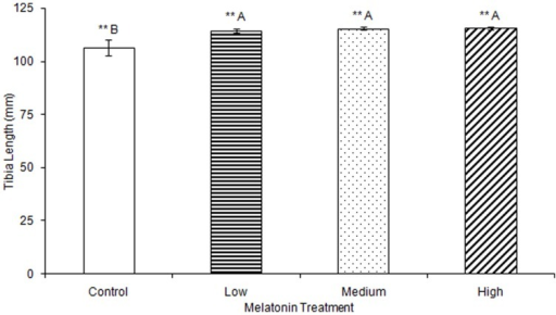 Tibias were significantly longer in birds treated with low (114.36±0.87), medium (115.48±0.51), or high (115.55±0.69) concentrations of melatonin compared to those from control birds (106.41±3.55; p<0.01).Groups sharing a letter are not significantly different.
