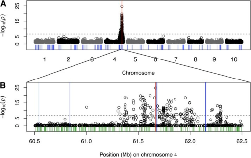 Genome-wide mapping of testa presence in a RIL biparental family. Manhattan plots for a linear model using 263 recombinant inbred lines genotyped at 265,487 SNPs, (A) scanning genome-wide and (B) with a detailed view at Tannin1 locus on chromosome 4, with Tannin1 indicated by the red bar. Other flavonoid-related genes are indicated by the blue bars, whereas all other annotated genes in the detailed view are indicated in green.