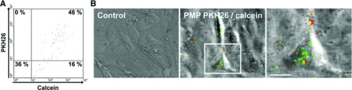 Co-localization of PMP cytoplasmic content and PMP-derived membranes inside the target cell. PMP were double-labelled with membrane dye PKH26 (red) and calcein AM that only becomes green fluorescent once hydrolysed by cytoplasmic esterases. (A) Analysis of PMP double-labelling by flow cytometry. Number in the upper right quadrant represents the percentage of double-labelled PMP. (B) PMP were then incubated with HBEC for 90 min. at 37°C. PMP supernatant was used as a negative control. Cells were washed, fixed with PFA 2% (v/v) and analysed by confocal microscopy. Merged images showing transmitted light and green and red channels are represented. Insert of the merged image is represented in the right column. Bar: 10 μm.