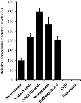 Relative intracellular percentage of C. concisus UNSWCD following autophagy inhibition and induction. Errors are presented as Standard Error of the Mean (SEM) based on a minimum of four biological replicates. 3-MA: 3-methyladenine; CQD: 50 μM chloroquine diphosphate; rapamycin: 200 nM rapamycin.