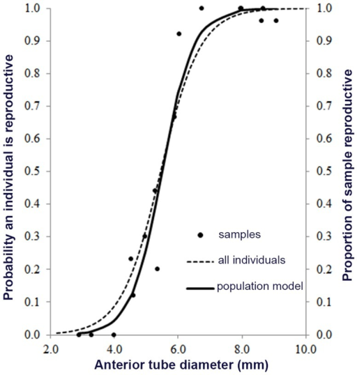 Model of reproductive readiness based on tube diameter.Onset of reproduction with size follows a logistic curve. The likelihood that an individual is reproductive at a given tube diameter is shown in the dotted line (left axis) using all individuals in our 2008 study. Tube diameter is highly correlated body characters but is an easier trait to measure. The right axis represents the proportion of the Endeavour samples that were reproductive (dots) and the full logistic curve (solid line) is the best fit for any sample taken.