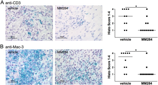 MM284 reduces infiltration of T-cells and macrophages in autoimmune myocarditis in mice.A, B, Infiltration of T-cells and macrophages was assessed using anti-CD3 and anti-Mac-3 staining. Representative images for each treatment are shown. Data in the right panels show individual scoring results (n ≥ 10), horizontal bars indicate medians, * indicates p < 0.05.